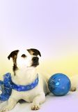 Holiday Dog in Blue Stock Photography