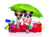 Holiday dogs. On a red bag dressed as tourists Stock Photography