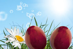 Holiday easter. stock photos