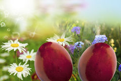 Holiday easter. stock image