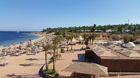 Holiday in Egypt. Beach and palm trees Stock Image