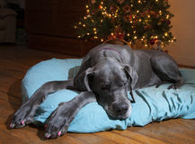 Holiday exhaustion Royalty Free Stock Photography