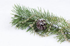 Holiday Fir Branch on Snow Stock Image