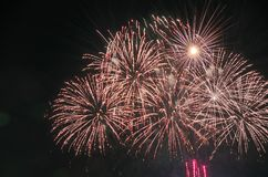 Holiday fireworks in the Park. royalty free stock image
