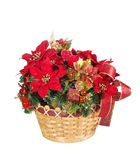 Holiday flower arrangement basket Royalty Free Stock Images