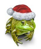 Holiday Frog. As a green amphibian wearing a Christmas hat as a festive symbol of nature and conservation during the season of gift giving on a white background Royalty Free Stock Photography