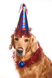 Holiday golden retriever Royalty Free Stock Photo