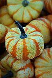 Holiday Gourds Royalty Free Stock Photography