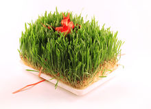 Holiday grass Royalty Free Stock Photo