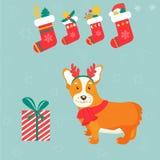 Holiday greeting card with cute corgi dog Royalty Free Stock Photography