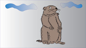 Holiday Groundhog Day. Stock Photo
