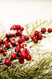 Holiday Holly and Greenery Background Royalty Free Stock Photos