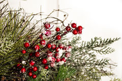 Holiday Holly and Greenery Background Royalty Free Stock Photography
