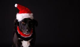 Holiday Hound Royalty Free Stock Image