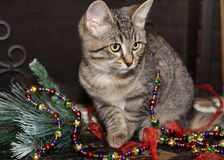 Holiday Kitten Royalty Free Stock Photography