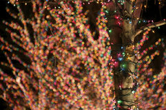 Holiday Lights. Wrapped around a Tree Trunk stock photography
