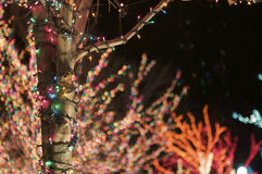 Holiday Lights. Wrapped around a Tree Trunk stock photo