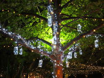 Holiday lights vintage in tree at night. Tree decorated with fairy lights and hanging jars - a gentle summer night in Australia at Christmas Stock Photo