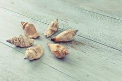 Holiday memories: decorative seashells Royalty Free Stock Image