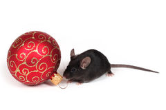 Holiday mouse Stock Image
