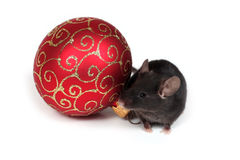 Holiday mouse Royalty Free Stock Photos