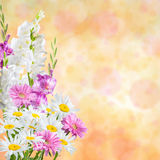 Holiday Nature Floral Background Stock Photos