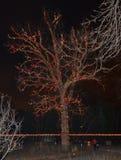 Holiday Oak Tree Stock Images