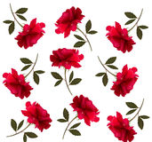 Holiday pattern with red beautiful roses. Royalty Free Stock Image