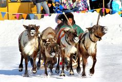 Holiday of peoples of the North in Novyy Urengoy, Russia Stock Photography