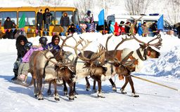 Holiday of peoples of the North in Novyy Urengoy, Russia Stock Photos