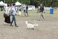 Holiday pets. Ukraine's first holiday for pets and their owners. Kiev. June 2015 Stock Photography