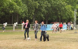 Holiday pets. Ukraine's first holiday for pets and their owners. Kiev. June 2015 Royalty Free Stock Photos