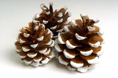 Holiday Pine Cones. Festive Pine Cones Royalty Free Stock Image