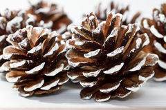 Holiday Pine Cones. Pine cones with painted white tips for holiday decorating Stock Photo