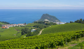 Holiday place between vineyards and wine production on the coast of Getaria. Basque Country stock photos