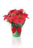 Holiday Poinsettia stock images