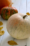 Holiday pumpkin Royalty Free Stock Images