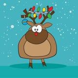 Holiday reindeer weird. Holiday Rudolf the red nose reindeer weird Stock Photography