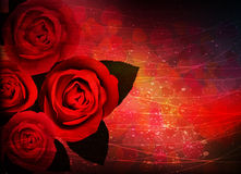 Holiday roses bouquet Royalty Free Stock Photo