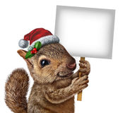 Holiday Squirrel Sign. Holiday squirrel  wearing a santa clause hat with holly and red berries holding a blank banner sign with copy space as a Christmas new Stock Image