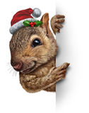 Holiday Squirrel Vertical. Sign wearing a santa clause hat with holly and red berries hanging over a blank side banner with copy space gripping a billboard as a Royalty Free Stock Photo