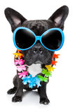 Holiday summer dog Royalty Free Stock Photos
