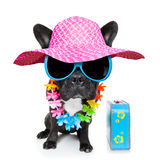 Holiday summer dog Royalty Free Stock Images
