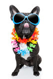 Holiday summer dog Stock Images