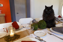 Holiday Table with Black Cat Stock Photography