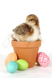 Holiday Themed Image With Baby Chicks and Eggs Stock Photography