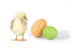 Holiday Themed Image With Baby Chicks and Eggs Royalty Free Stock Photo