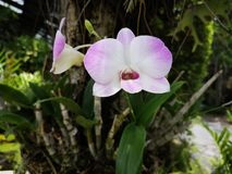 Various orchid flowers tropical plant stock image