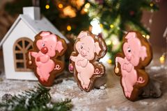 Holiday traditional food bakery. Three Gingerbread funny piggy in cozy warm decoration with garland lights.  royalty free stock images