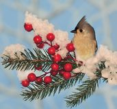 Holiday Tufted Titmouse Royalty Free Stock Photos